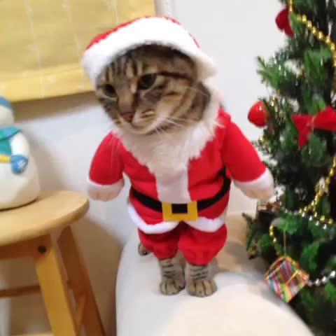 Ce chat déguisé en père Noël n\u0027a rien à envier au chien ewok