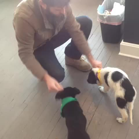 Vine by Tackk - No big deal, just playing with puppies in the office. Thanks to Uber, AnimalPlanet and Cleveland APL! #uberpuppybowl #socute #puppies