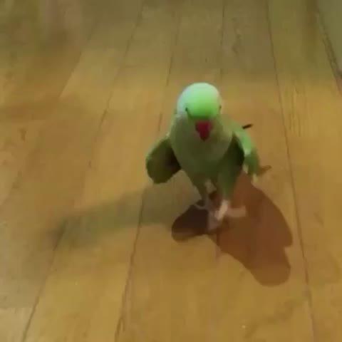 Vine by Ghetto Videos - Birdyonce ????