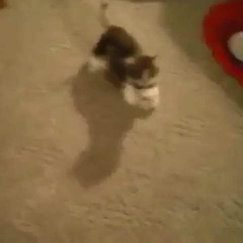 Vine by theCHIVE - Remy speak!