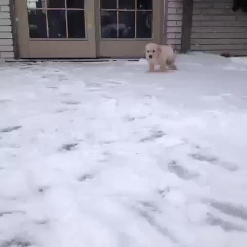 Vine by Cute Emergency - If ur having a bad day watch this puppy run through snow.