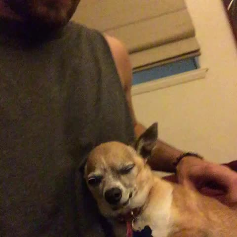 When you stop petting Bae - Vine by Trevor Holmes - When you stop petting Bae