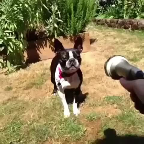 Vine by Animals - #BestAnimalVines