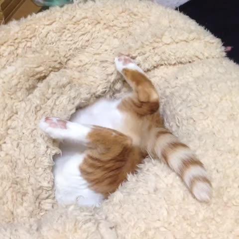覗いてみた #ねこ #cat #kitty - Vine by MIKOTOqωゞ - 覗いてみた #ねこ #cat #kitty