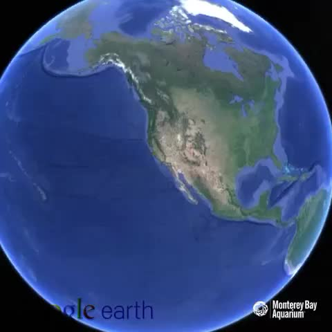 Youll find us on the central coast of California in beautiful Monterey Bay! #bigbluelive - Vine by Monterey Bay Aquarium - Youll find us on the central coast of California in beautiful Monterey Bay! #bigbluelive