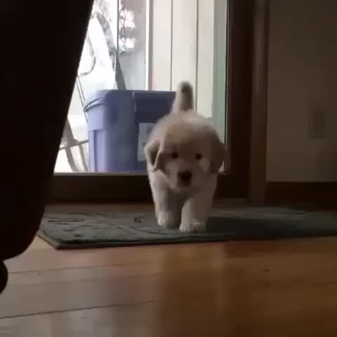 Vine by Cute Emergency - When the floor is hot lava but your human needs you. 🐶😍