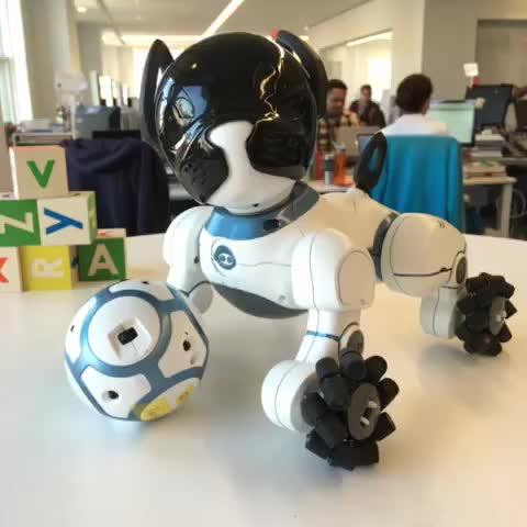 Conheça Chip O Cão Robô Que Pode Ser Treinado Robótica