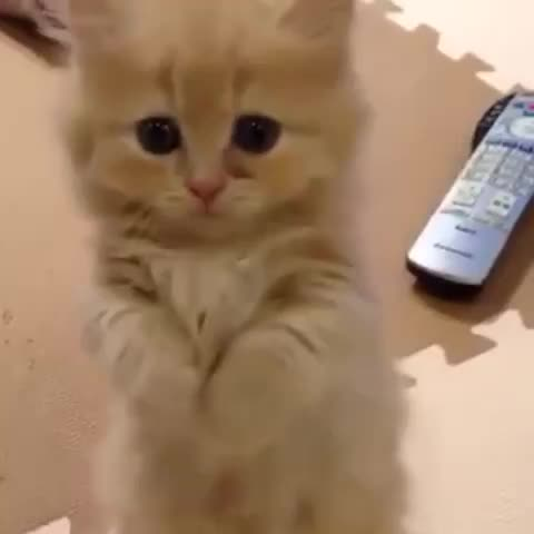 Vine by Cute Emergency - Will you play with me please?!? Video via YouTube