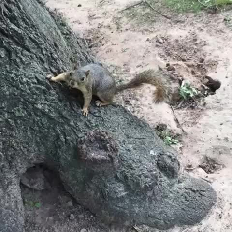 Vine by Anastasia Richardson - Squirrel #KeepLovingMe #musicvines #music