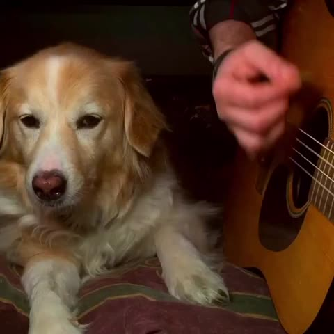"""Please, no more Wonderwall"" Maple ???? - Vine by Trench - ""Please, no more Wonderwall"" Maple 🐶"