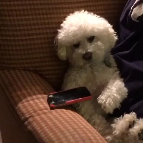 Vine by Patrick Barnes - When someone tries to take your phone.... w/ Quincy