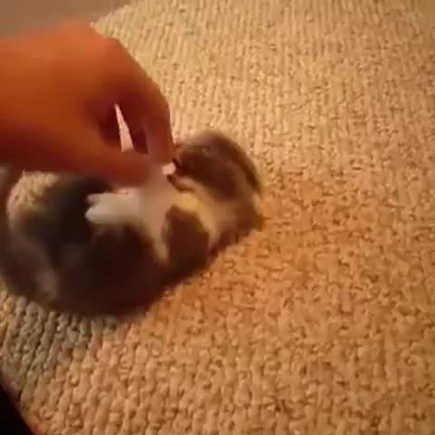 Vine by The Butt Shark - Heres your daily dose of antidepressants! #kitty