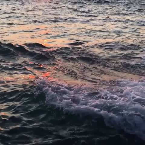 - Vine by Ryan Pernofski