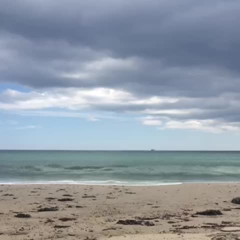 Vine by Russell Maloney - At sea...