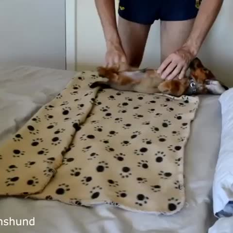 Vine by Stoner Vines - When youre so high you roll up your dog
