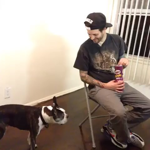 Never tease a dog! Especially Buster Beans