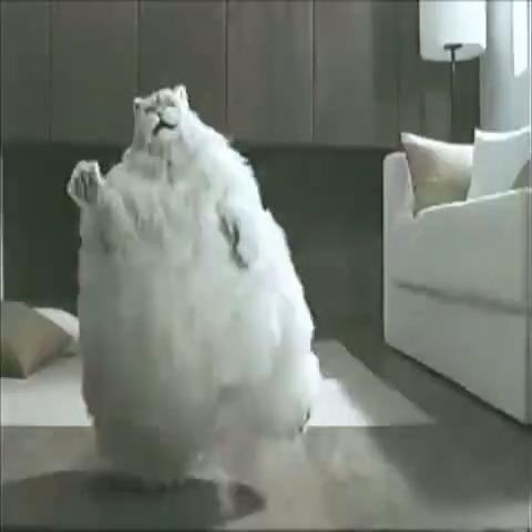 Fat Cats Dancing 23